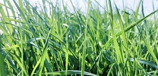 物联网技术推进农业生产降本增效