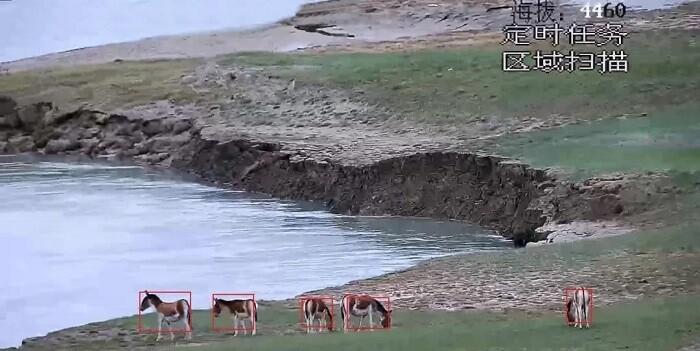 """以科技守护""""高原精灵"""" 海康威视助力可可西里地区藏羚羊保护"""